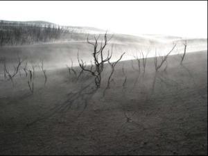 cendres-squelettes-arbres